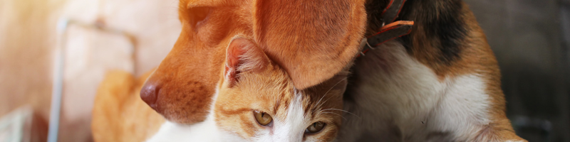Banner Animales